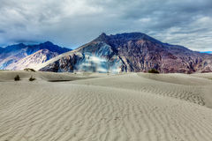 Sand dunes in Himalayas. Hunder, Nubra valley, Ladakh Stock Photo