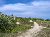 Sand Dunes at Hornbaek, Denmark, Scandinavia. Sand dunes in the popular resort Hornbæk in North Zealand, Denmark, Scandinavia, Europe stock image