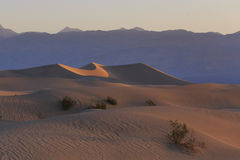 Sand dunes illuminated with the golden light Stock Images