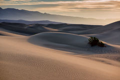 Free Sand Dunes In Death Valley Stock Photography - 49445292