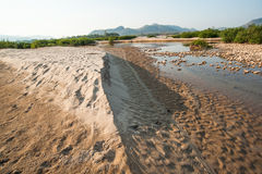 Sand dunes of Khong river and water plant. Stock Image