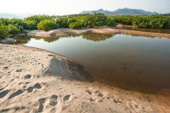 Sand dunes of Khong river and water plant. Stock Photography