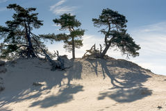 Sand Dunes, kootwijkerbroek, netherlands Royalty Free Stock Photo