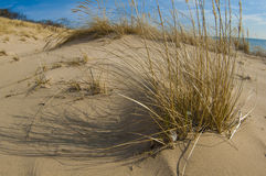 Sand dunes of lake michigan. Sand dunes with saw grass along the coast line of lake Michigan Stock Image