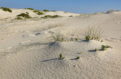 Sand dunes landscape. Fingal Bay. Australia Royalty Free Stock Images