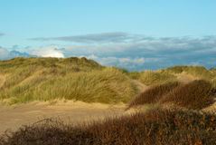 Sand dunes in late afternoon Stock Image