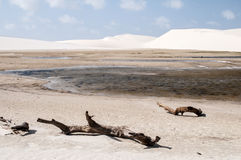 Sand dunes of the Lencois Maranheses in Brazil Stock Photo