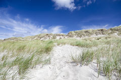 Sand dunes with leymus. Denmark West Coast. Royalty Free Stock Photography