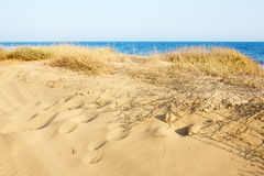 Sand Dunes at the Mediterranean sea. Stock Images