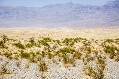 Sand Dunes of Mesquite Flats desert, Death Valley Stock Images