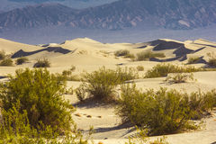 Sand Dunes in the Morning Royalty Free Stock Image