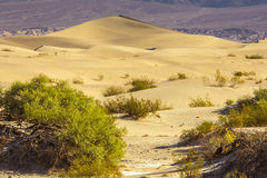 Sand Dunes in the Morning Stock Photos