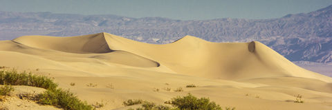 Sand Dunes in the Morning Royalty Free Stock Images