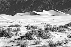 Sand Dunes in the Morning Stock Image
