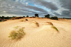 Sand dunes in morning sunlight Royalty Free Stock Photography