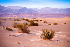 Sand Dunes And Mountains in sunrise, Death Valley National Park, California, USA Royalty Free Stock Image