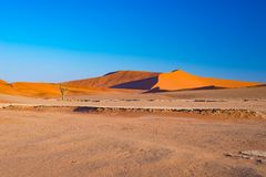 Sand dunes in the Namib desert at dawn, roadtrip in the wonderful Namib Naukluft National Park, travel destination in Namibia, Afr. Ica Royalty Free Stock Photo