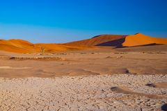Sand dunes in the Namib desert at dawn, roadtrip in the wonderful Namib Naukluft National Park, travel destination in Namibia, Afr Stock Photography