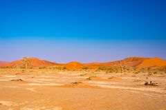 Sand dunes in the Namib desert at dawn, roadtrip in the wonderful Namib Naukluft National Park, travel destination in Namibia, Afr Royalty Free Stock Images