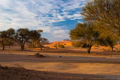 Sand dunes in the Namib desert at dawn, roadtrip in the wonderful Namib Naukluft National Park, travel destination in Namibia, Afr. Ica. Morning light, mist and Royalty Free Stock Images