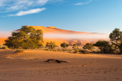 Sand dunes in the Namib desert at dawn, roadtrip in the wonderful Namib Naukluft National Park, travel destination in Namibia, Afr Royalty Free Stock Photography