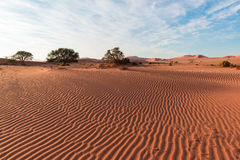 Sand dunes in the Namib desert at dawn, roadtrip in the wonderful Namib Naukluft National Park, travel destination in Namibia, Afr Royalty Free Stock Image