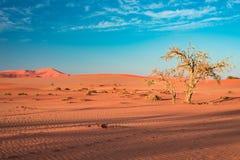 Sand dunes in the Namib desert at dawn, roadtrip in the wonderful Namib Naukluft National Park, travel destination in Namibia, Afr Stock Photo