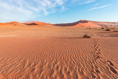 Sand dunes in the Namib desert at dawn, roadtrip in the wonderful Namib Naukluft National Park, travel destination in Namibia, Afr Stock Images