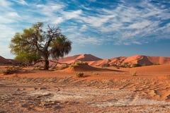 Sand dunes in the Namib desert at dawn, roadtrip in the wonderful Namib Naukluft National Park, travel destination in Namibia, Afr Stock Photos