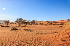Sand dunes in the Namib desert. Royalty Free Stock Photos