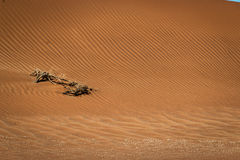 Sand dunes in the Namib desert. Royalty Free Stock Photography