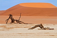 Sand dunes of Namibia Stock Photography