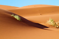 Sand Dunes of the Namibian Desert Royalty Free Stock Image