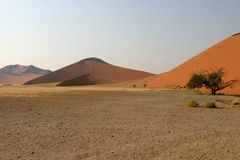 Sand dunes in Namibian desert. Scenic view of sand dunes in Namibian desert with lone tree in foreground stock image