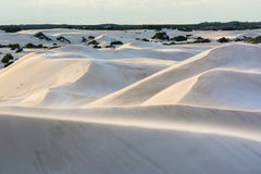 Sand Dunes National Park Desert in Australia. Landscape, beautiful view in layers of sand dunes and small trees background with shadow of light in western Stock Image