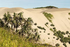 Sand Dunes National Park Royalty Free Stock Photo