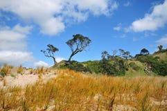 Sand dunes with native vegetation. Sand dunes with native weeds on Tutukaka Coast, New Zealand Stock Photos