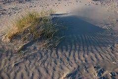 Sand dunes. At the nDutch coastline Stock Photography