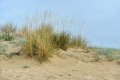 Sand dunes near the beach Stock Photo