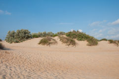 Sand dunes near the coast of the Black Sea, Russia Royalty Free Stock Photo