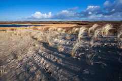 Sand dunes in North Holland Royalty Free Stock Photography