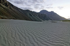 Sand dunes in Nubra Valley, india. Sand Dunes in Nubra Valley at evening, Ladakh, Jammu and Kashmir, India Royalty Free Stock Photo