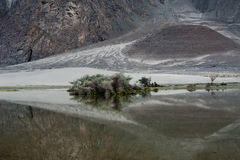 Sand dunes at Nubra Valley. India, Ladakh Royalty Free Stock Photo