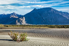 Sand dunes in Nubra valley, Ladakh Royalty Free Stock Images
