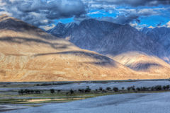Sand dunes. Nubra valley, Ladakh, India Royalty Free Stock Images