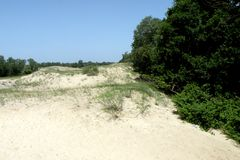 Sand dunes and oaks in Donau Delta Stock Images