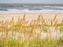 Sand dunes at the ocean coast Stock Images