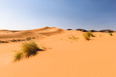 Sand dunes Ouzina, Morocco Stock Images