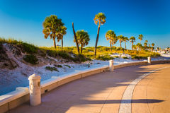 Sand dunes and palm trees along a path in Clearwater Beach, Flor Stock Photos