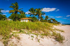 Sand dunes and palm trees on the beach in Palm Beach, Florida. Stock Images